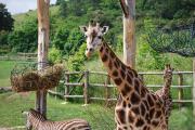 İstanbul'daki Hayvanat ve Botanik Bahçeleri